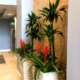 Live plants for downtown Sarasota condominium