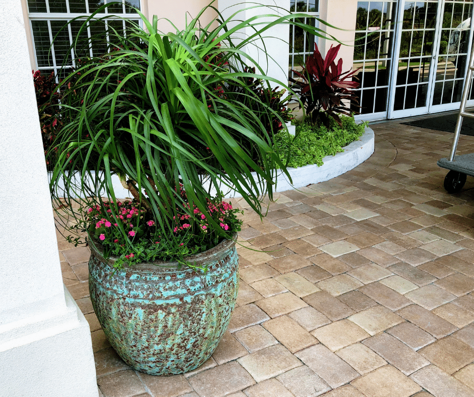 Textured Ceramic with Tropical Plants
