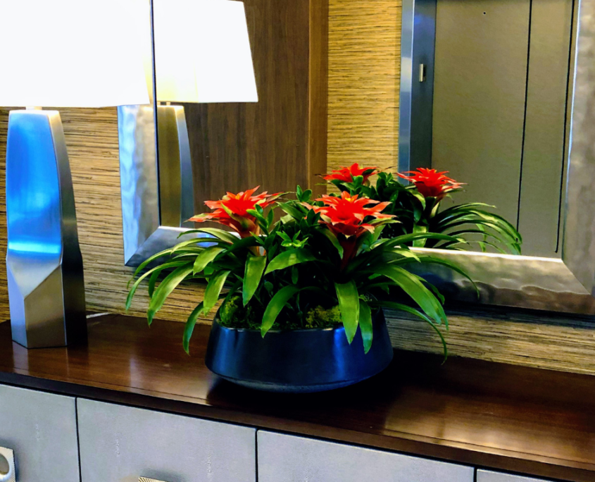 Tropical Bromeliad arrangement