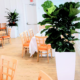 Plant service for event space with live tropical plants