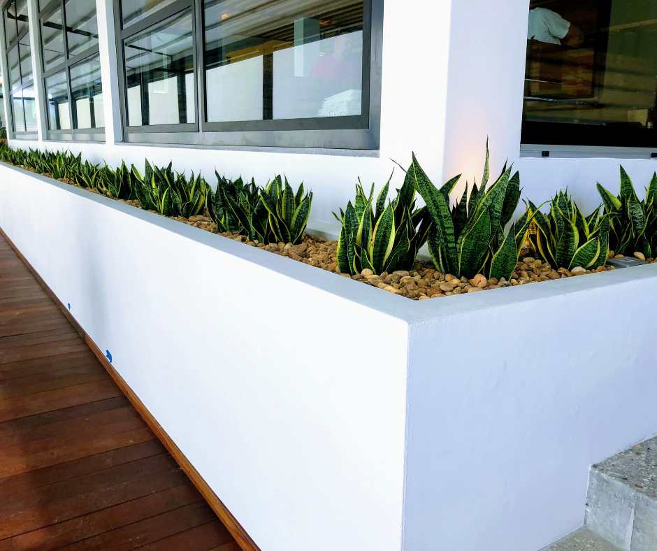 Simple, modern look with snake plants and river rock at restaurant