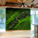 GSky Living Wall in Sarasota clubhouse
