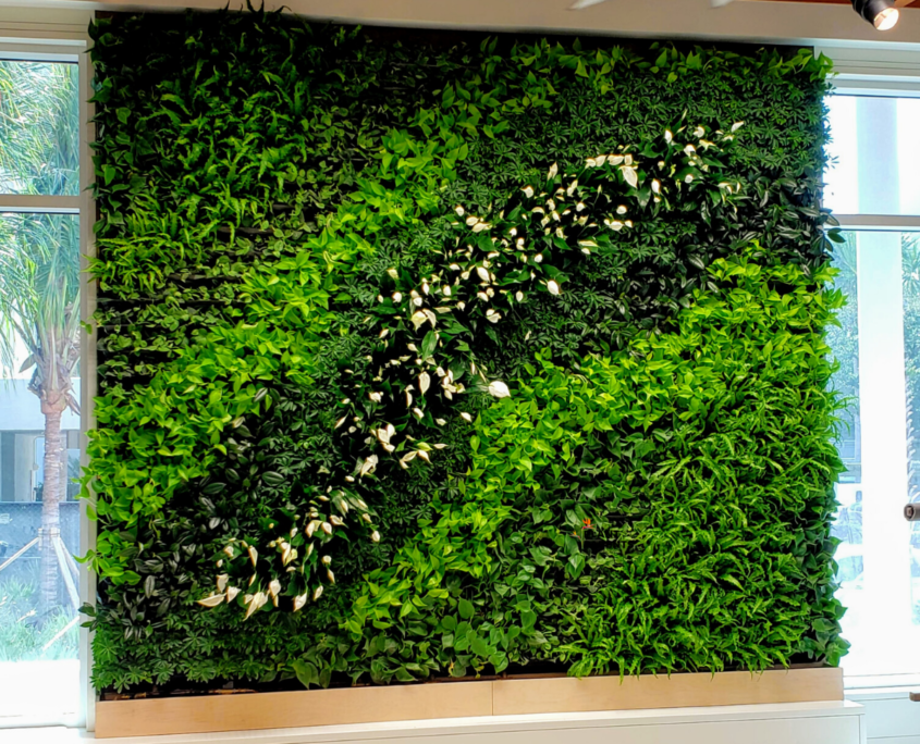Vertical Garden Green wall in Longboat Key Florida