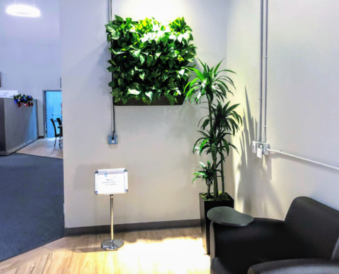 Plant wall and office plants for office in Sarasota / Bradenton area