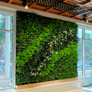 Living wall vertical garden in club lounge