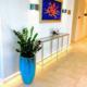 ZZ plant in lobby
