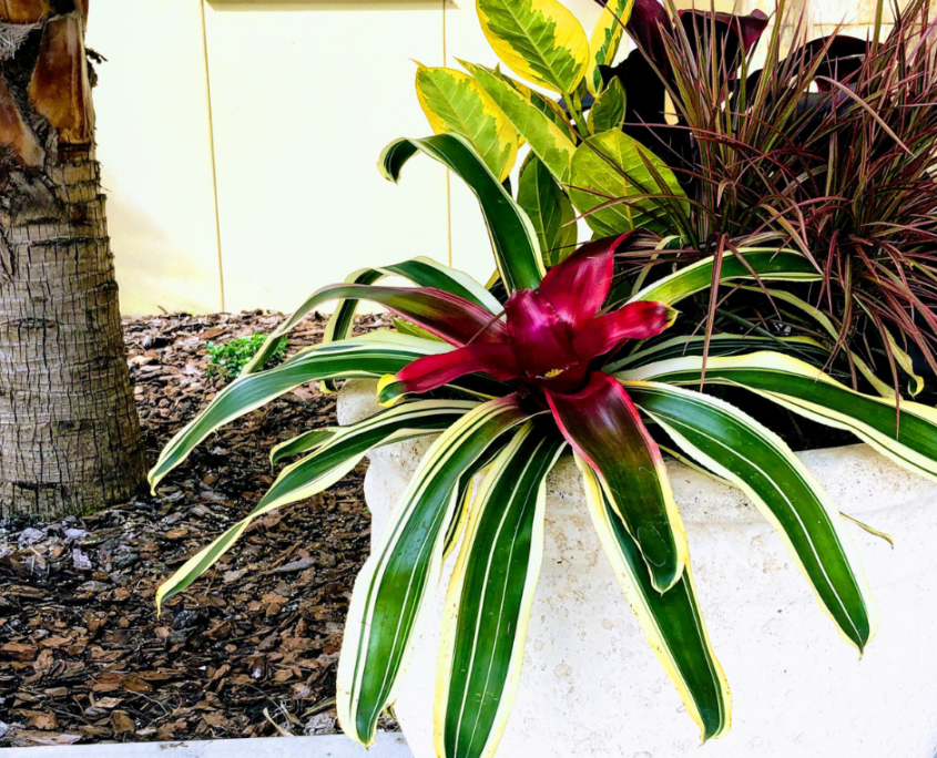 Landscape bromeliad on rotation