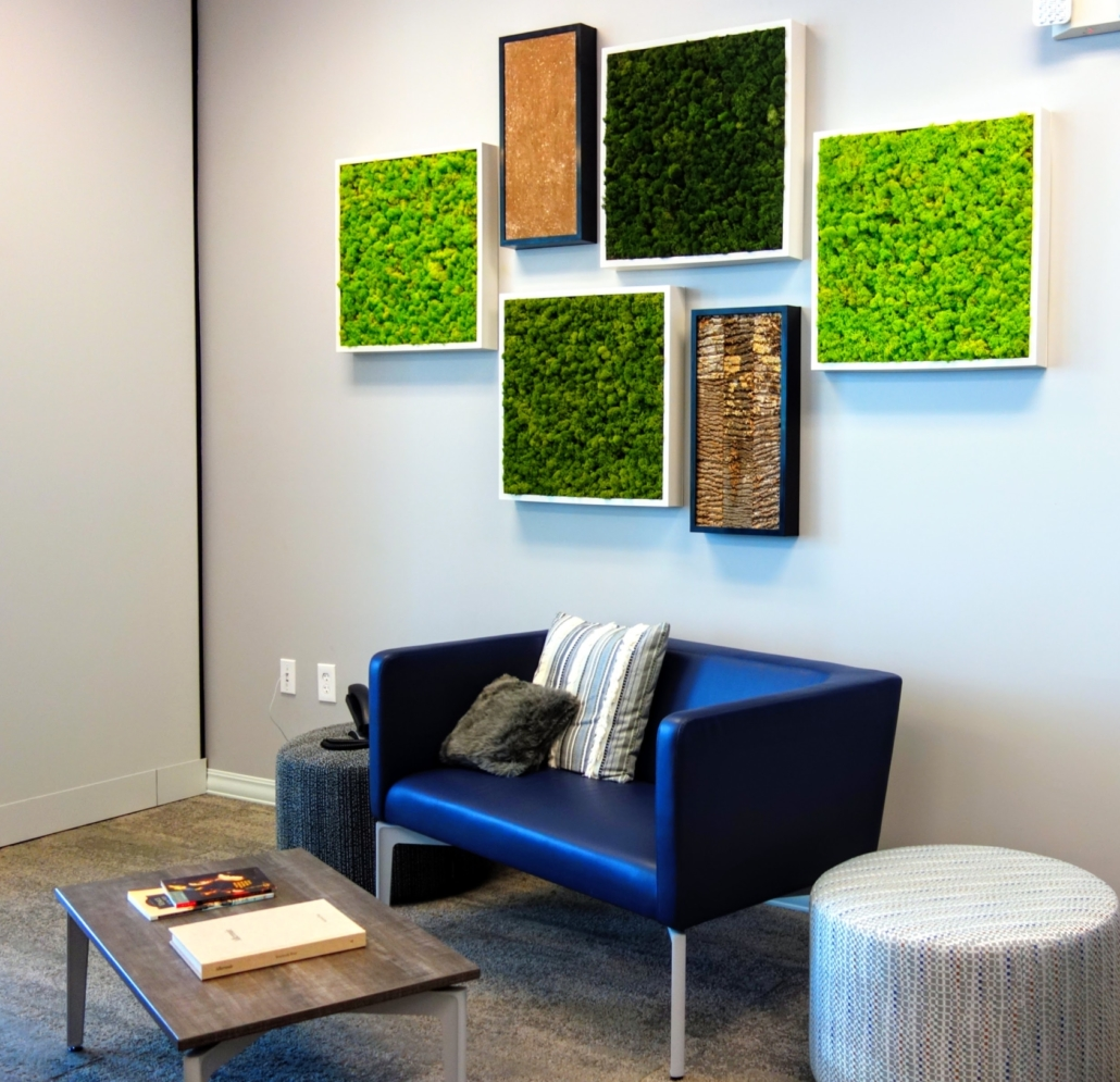 Moss wall, green wall, living wall