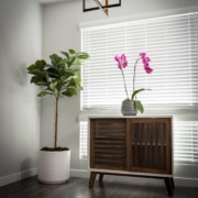 Plants in window sill