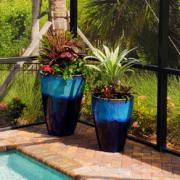 Patioscape plants for pool deck