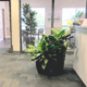 Plants in Office Building, professional plant service and office design plants