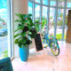 Professional plant service in hotel lobby, featuring fiddle lead fig in aqua colored ceramic pot.