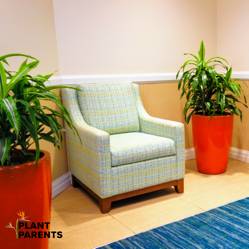 Plants in hotel