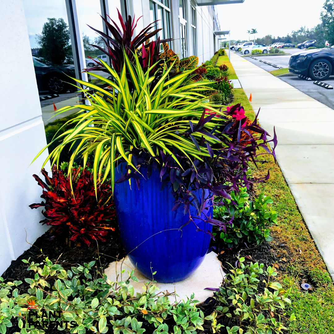 Professional mixed entryway plantings