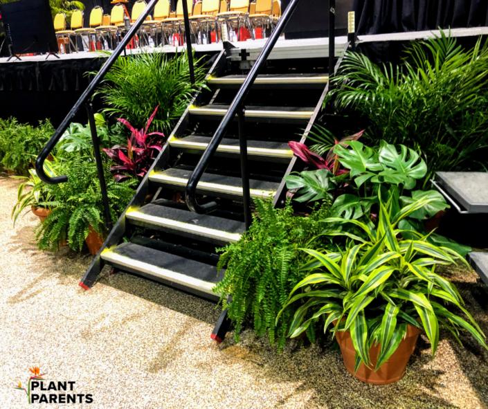 tropical plant rental, graduation plants