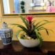 Live tropical flower arrangement for lobby