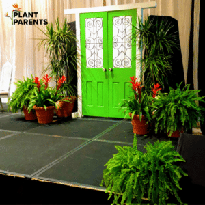 Plant rental for gala