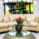 Live plant program professionally maintained lobby plants