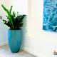 ZZ Plant in Aqua Ceramic in Lobby